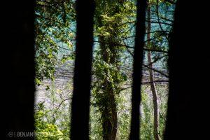 Die Soča blitzt türkis zwischen den Bäumen hindurch.