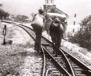 Mit dem Esel statt mit dem Zug